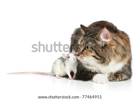 Fluffy mixed-breed cat and rat on a white background - stock photo