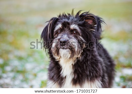 fluffy mixed breed dog - stock photo