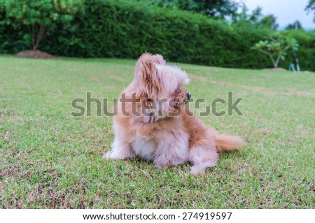 fluffy mixed breed dog playing in the garden - stock photo
