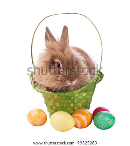 fluffy rabbit in green basket with easter eggs isolated on white - stock photo