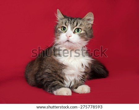 Fluffy tabby and white cat lies on red background - stock photo