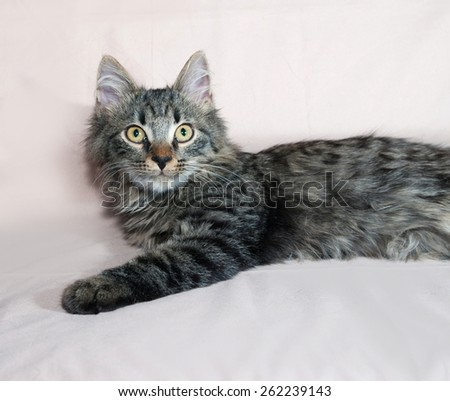 Fluffy tabby Siberian kitten lying on brown background - stock photo