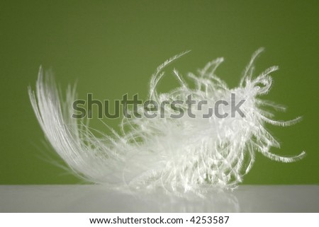 Fluffy white feather with green background and spotlight - stock photo