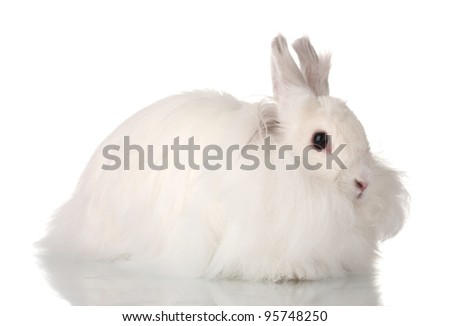 Fluffy white rabbit isolated on white - stock photo