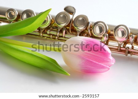 flute and flower - stock photo