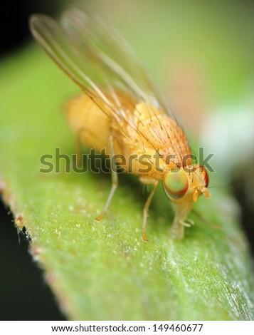 fly - stock photo