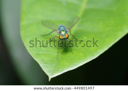 Fly and small insect in the garden - stock photo