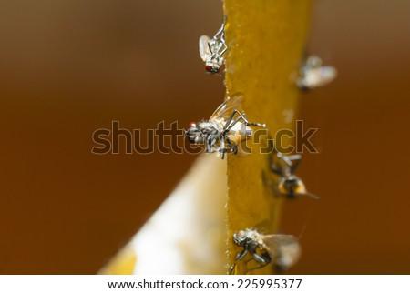 fly catch ribbon - stock photo