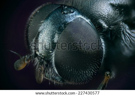 Fly from metal - stock photo