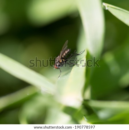 fly in the grass. macro - stock photo