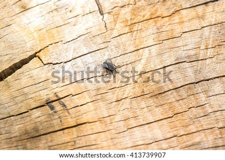 Fly insect on tree trunk - stock photo
