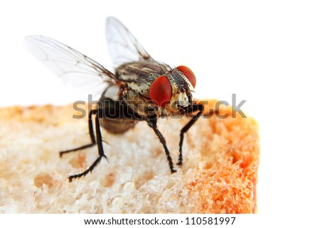 Fly on a Slice of Bread in extreme close-up - stock photo