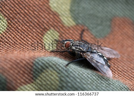 fly on background camouflage - stock photo