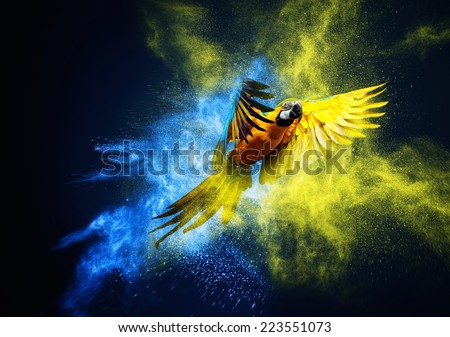 Flying Ara parrot over colourful powder explosion  - stock photo