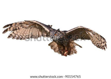 Flying/attacking owl isolated on white. - stock photo