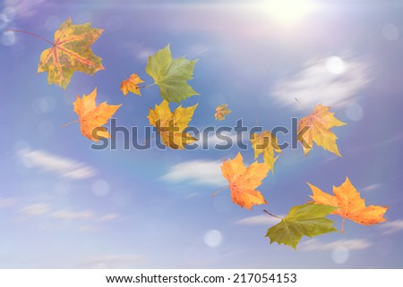 flying autumn leaves and blue sunny sky - stock photo