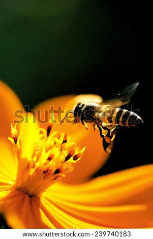 Flying bee in water painting style, dark tone - stock photo