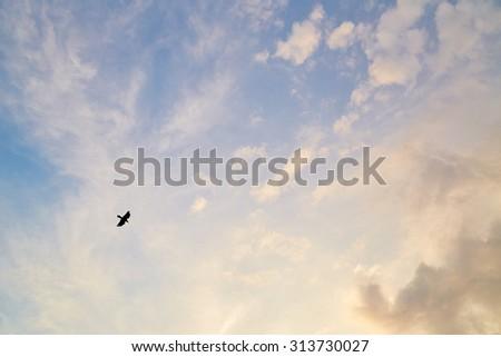 Flying bird in sky - stock photo