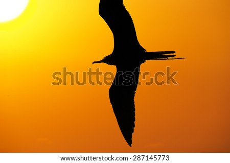 Flying bird silhouette with the sun high in the sky and a bright yellow and orange glowing sky in the background. - stock photo