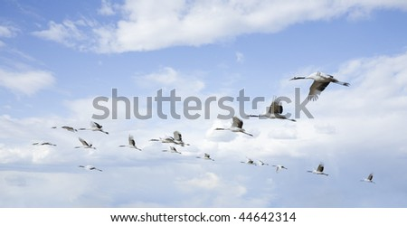 flying birds - stock photo