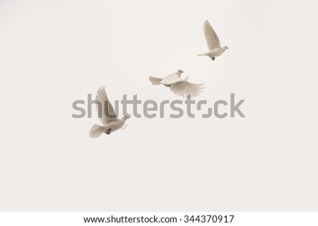 flying doves - stock photo