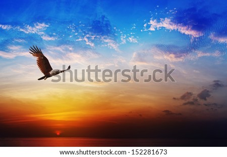 Flying eagle on beautiful sunset sky background - Bird of prey - Brahminy Kite - stock photo