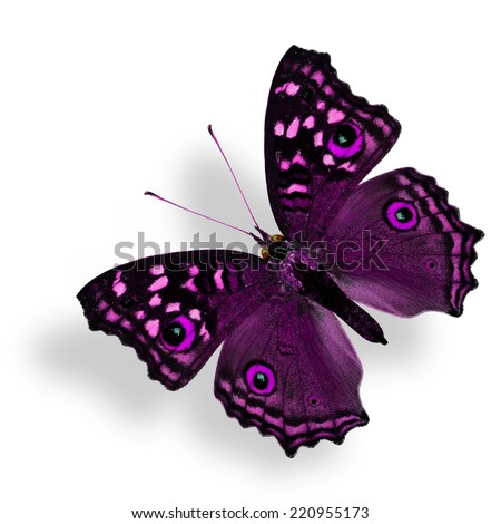 Flying Fancy Purple Butterfly (Grey Pansy) isolated on white with soft shadow beneath - stock photo