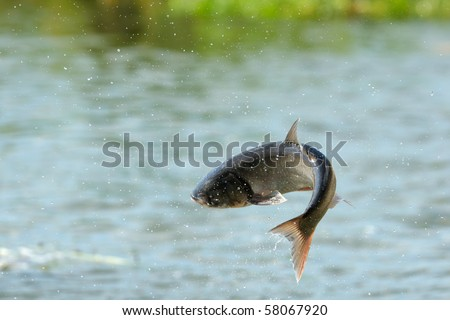 flying fish over the river - stock photo