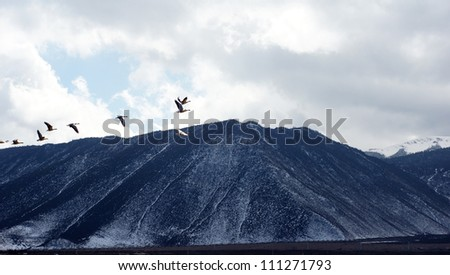 flying geese across the hill in the western china nobody with mountain range vast - stock photo