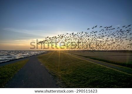 Flying goose, Terschelling The Netherlands - stock photo