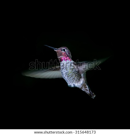 Flying humming bird on dark background - stock photo