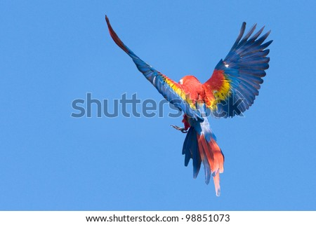 flying macaw parrot - stock photo