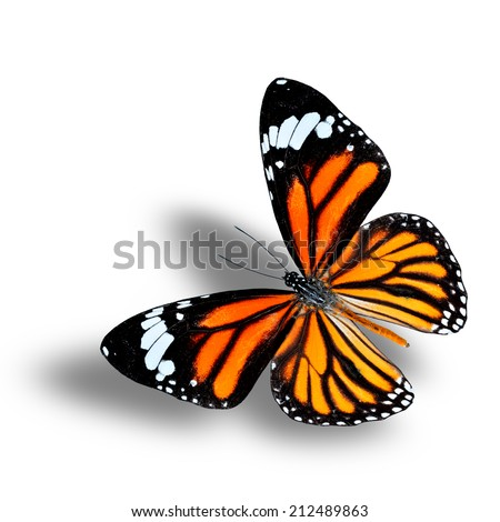 Flying of Common Tiger Butterfly with soft shadow beneath - stock photo