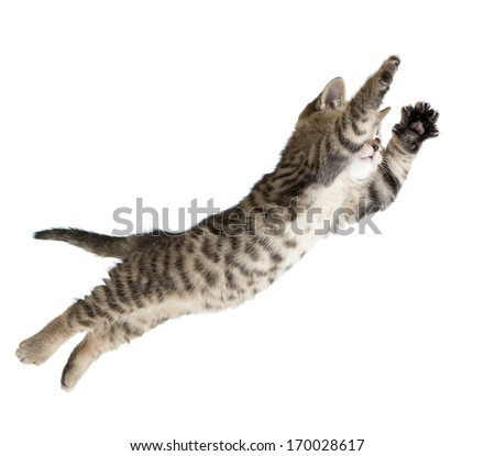 Flying or jumping kitten cat isolated on white - stock photo