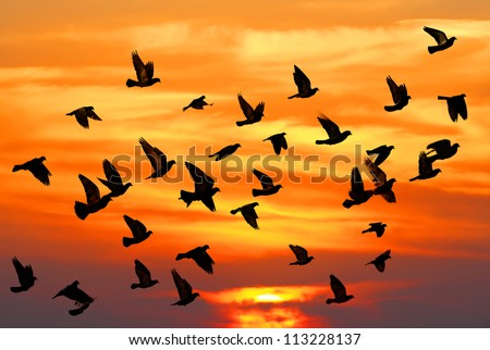 Flying pigeons on the sunset background - stock photo