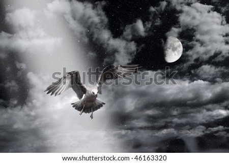 flying sea gull in the night - stock photo