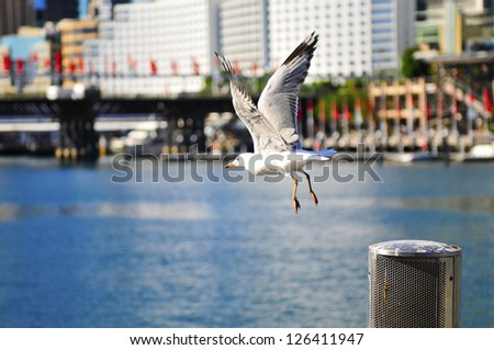 Flying seagull in Darling Harbour, Sydney - stock photo