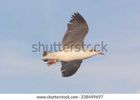 Flying seagull under blue sky - stock photo