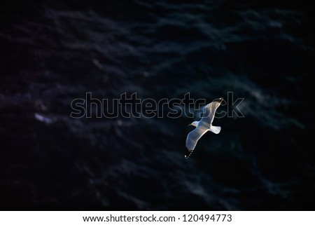 Flying seagull with ocean in the background, Portugal - stock photo
