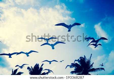Flying seagulls - stock photo
