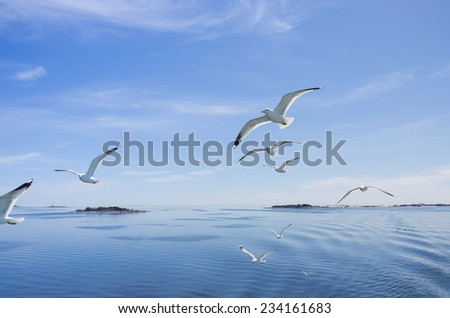 Flying Seagulls. - stock photo