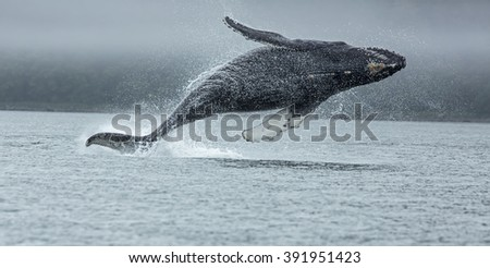 FLYING WHALE - stock photo