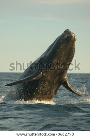 Flying whales - stock photo