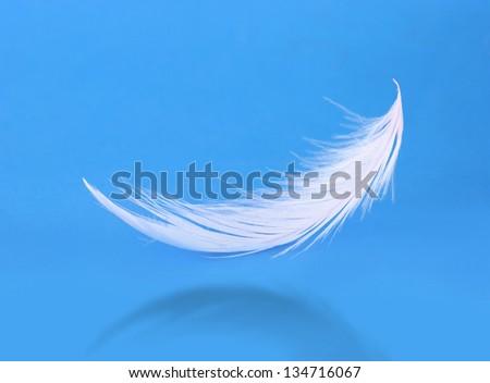 Flying white feather on blue background - stock photo
