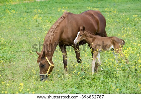 Foal with a mare  - stock photo