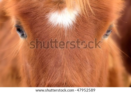 Foals Face - stock photo