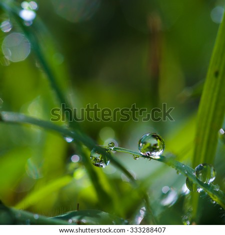 Focus clear dew drops on the grass in the morning. - stock photo