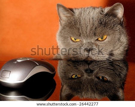 focus on a mouse? - stock photo