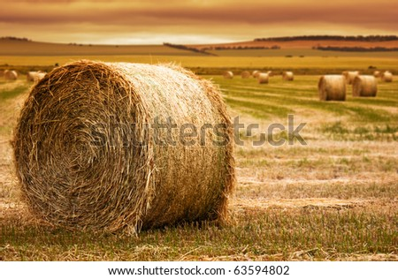 Focus on hay bale in the foreground in rural field - stock photo