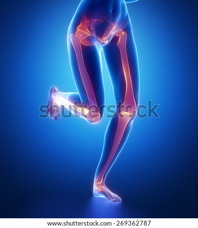 Focused on leg bones anatomy - stock photo